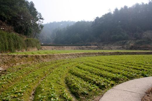 Mao Zedong's family plantation