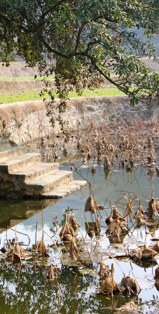 Mao Zedong's lotus pond.